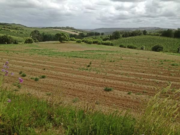 View from Serra do Picoto