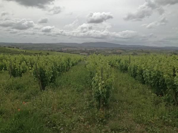 View of Montejunto from Serra do Picoto